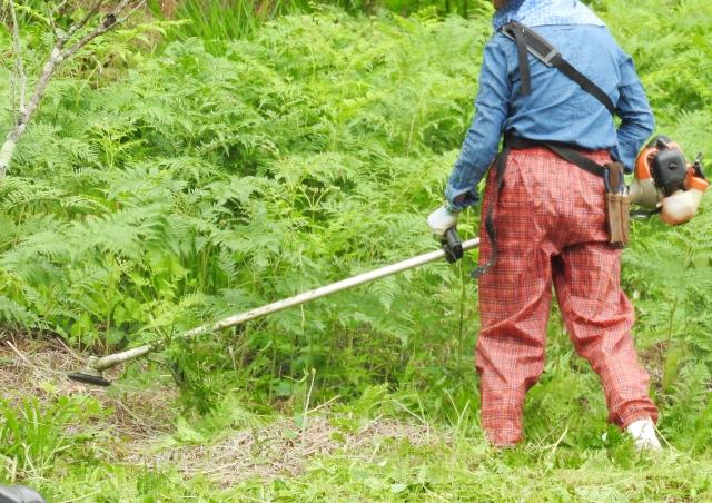 高知市で草刈りにかかる料金相場は?追加料金や業者選びのコツまで解説