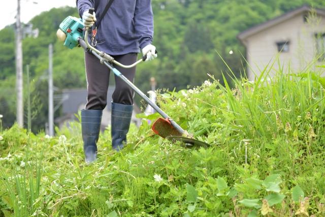 高知市で草刈りに最適な年3回の時期~楽に草刈りを終えるコツまで徹底解説